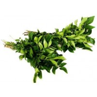 Curry Leaves (Kadi Patta) কারি পাতা - करी पत्ते - 1 bundle